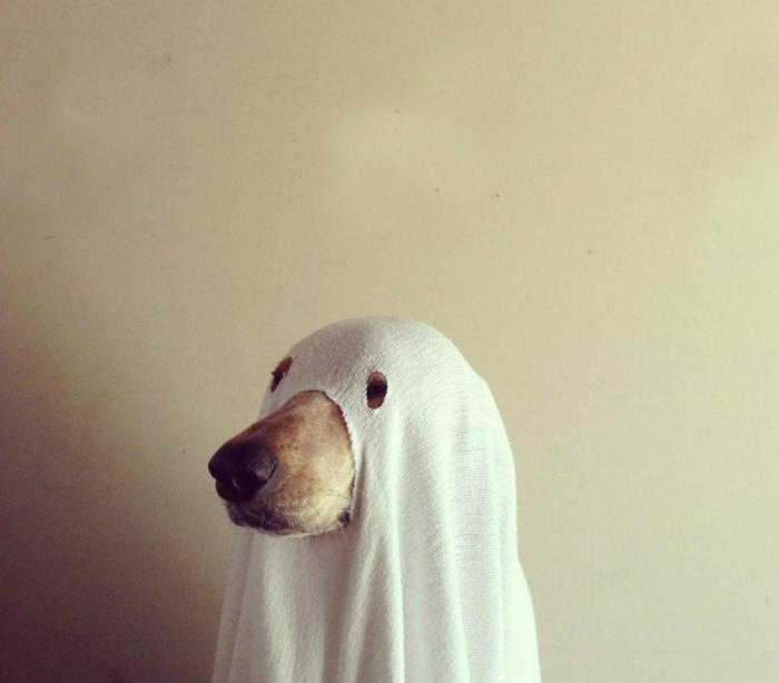 fantome-idee-marrante-idee-deguisement-halloween-pour-votre-chien
