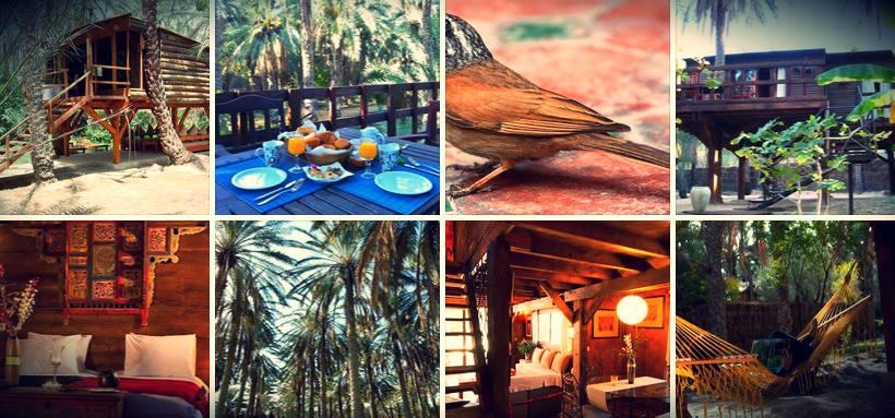 Diar Abou Habibi, Lodge de charme - Oasis de Tozeur - Contact: (+216) 76 460 400 | Facebook