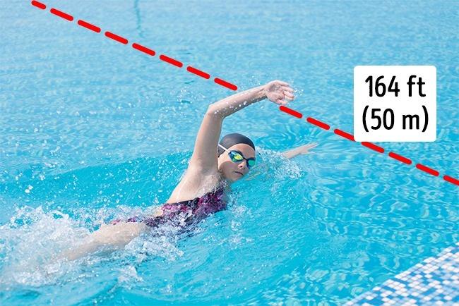 Capacité à nager