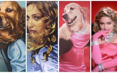 Maxdonna : Ce chien a recrée les looks iconiques de Madonna