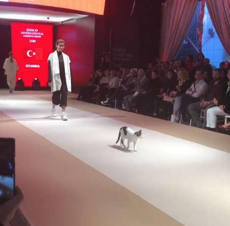 Un chat en quête d'attention entre dans un défilé de mode en Turquie !